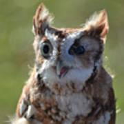 Cute Screetch Owl Art Print