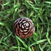 Baby Pine Cone Art Print