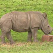 Baby Rhino Chilling Art Print