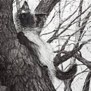Baby Up The Apple Tree Art Print