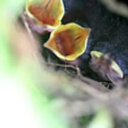 Baby Wrens In The Flowers 338 Art Print