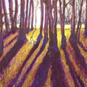 Back Lit Field Art Print