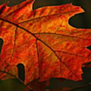 Backlit Leaf Art Print