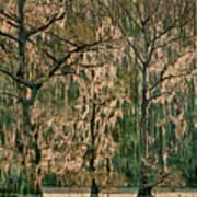 Backlit Moss-covered Trees Caddo Lake Texas Art Print