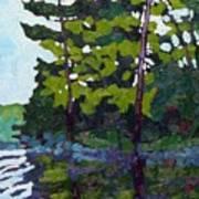 Backlit Pines Art Print