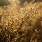 Backlit Wildflower Seeds In Autumn Art Print
