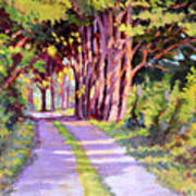 Backroad Canopy Art Print