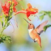 Backyard Hummingbird Series # 54 Art Print