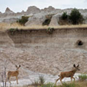 Badlands Deer Sd Art Print