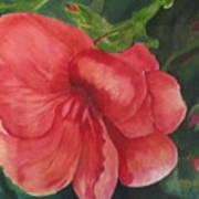 Bahama Beauty Art Print