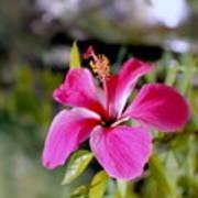 Bahamian Flower Art Print