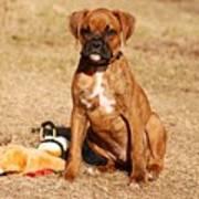 Bailey The Boxer Puppy Art Print