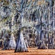 Bald Cypress In Caddo Lake Art Print
