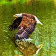 Bald Eagle Cutting The Water Art Print