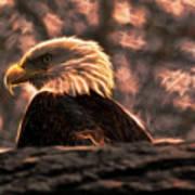 Bald Eagle Electrified Art Print