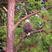 Bald Eagle Fresh Catch Art Print