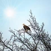 Bald Eagle In A Tree Enjoying The Sunlight Art Print