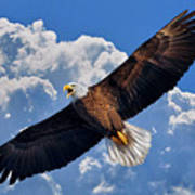 Bald Eagle In Flight Calling Out Art Print