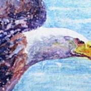 Bald Eagle Portrait 2 Art Print