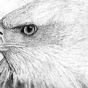 Bald Eagle Profile Art Print