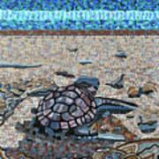 Bald Head Island, Loggerhead Sea Turtle Art Print