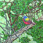 Bald Head Island, Painted Bunting At Defying Gravity Art Print