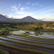 Bali Terrace Rice Field Art Print