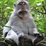 Balinese Serious Monkey Art Print