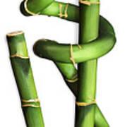 Bamboo 2 Art Print