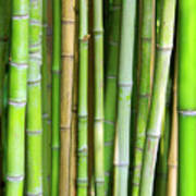 Bamboo Background Art Print by Carlos Caetano