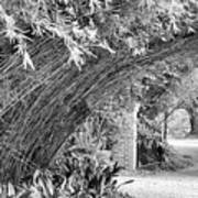 Bamboo Black White Rip Van Winkle Gardens  Art Print