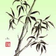 Bamboo Drawing  Art Print