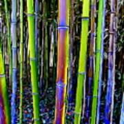 Bamboo Dreams #13 Art Print