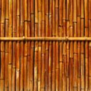 Bamboo Fence Art Print by Yali Shi