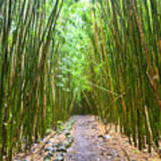 Bamboo Forest Trail Hana Maui 2 Art Print