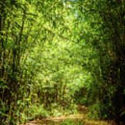 Bamboo Hike Art Print