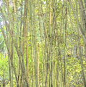 Bamboo In San Diego Zoo Art Print