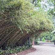Bamboo Overhang Path  Art Print