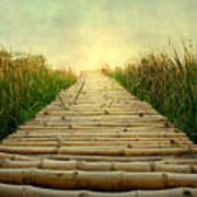 Bamboo Path In Grass At Sunrise Art Print