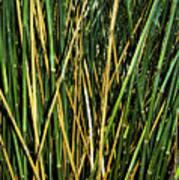 Bamboo Shoots  Art Print