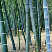 Bamboo Tree Forest, Close Up Art Print