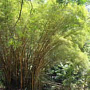 Bamboo Trees In Garden Of Eden Art Print