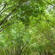 Bamboo Trees In Wangjianglou Park In Chengdu China Art Print