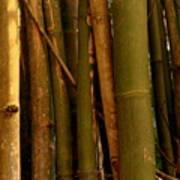 Bambusa Vulgaris Art Print
