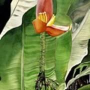 Banana Blossom Art Print