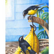 Bananaquits And Bananas Art Print