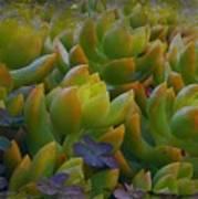 Bank Of Succulents Art Print