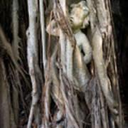 Banyan Grows Over Statue Art Print
