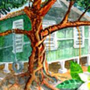 Banyan In The Backyard Art Print