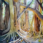 Banyan Shadow And Light Art Print